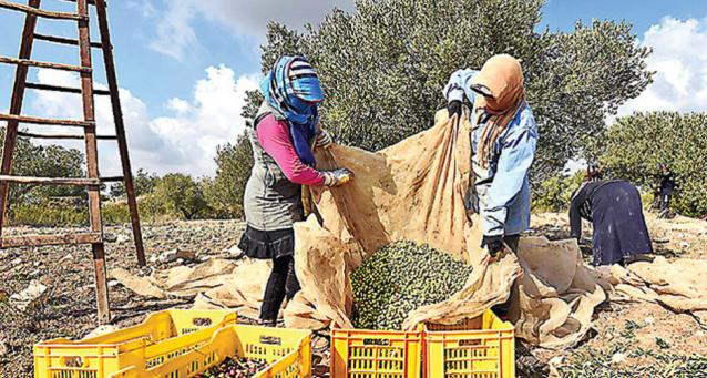 economia-2016-02-olio-tunisia-big